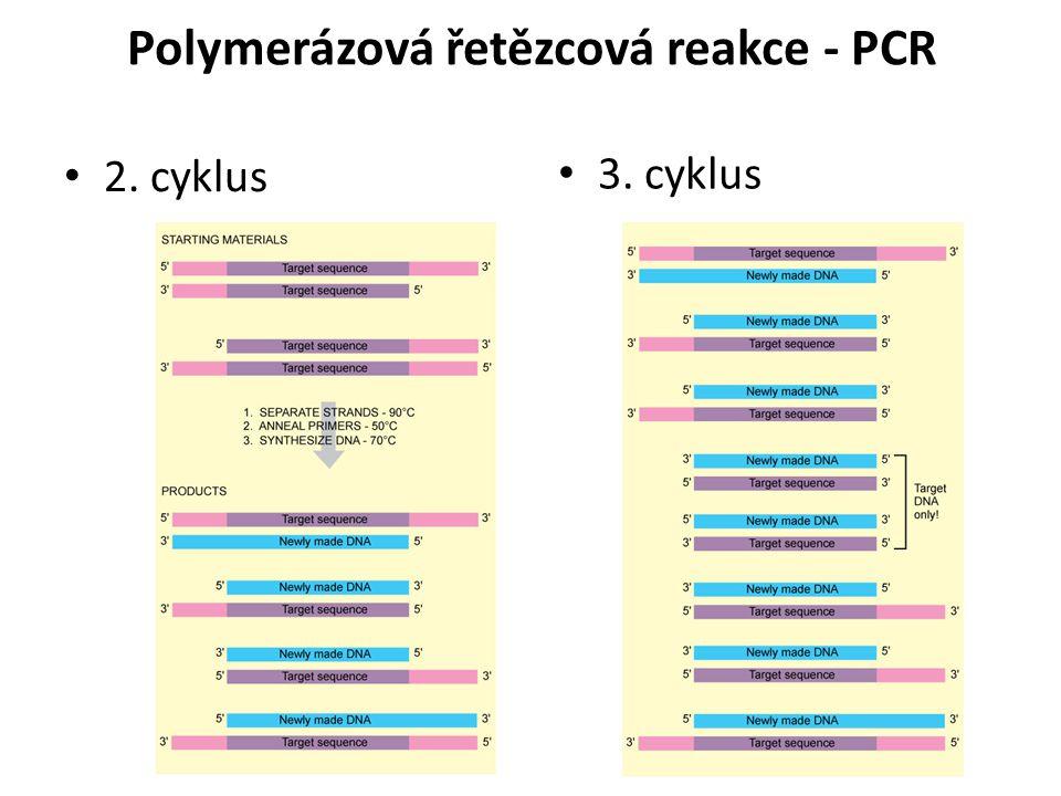 2. cyklus 3. cyklus Polymerázová řetězcová reakce - PCR