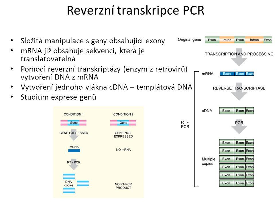 Reverzní transkripce PCR Složitá manipulace s geny obsahující exony mRNA již obsahuje sekvenci, která je translatovatelná Pomocí reverzní transkriptáz