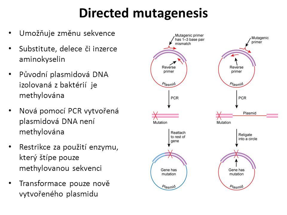 Directed mutagenesis Umožňuje změnu sekvence Substitute, delece či inzerce aminokyselin Původní plasmidová DNA izolovaná z baktérií je methylována Nov