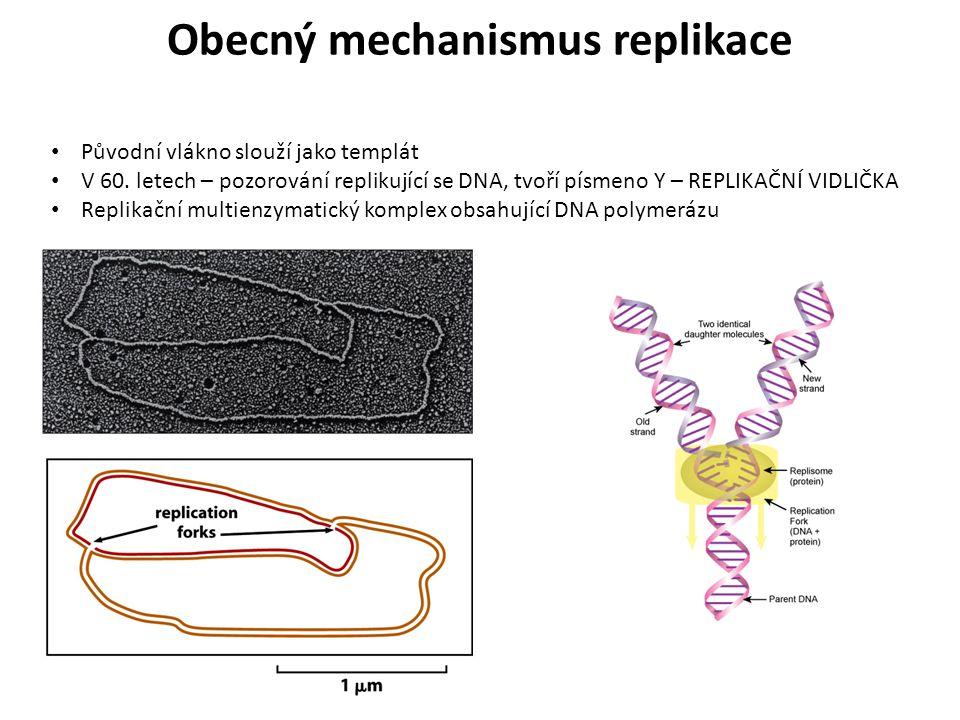 Původní vlákno slouží jako templát V 60. letech – pozorování replikující se DNA, tvoří písmeno Y – REPLIKAČNÍ VIDLIČKA Replikační multienzymatický kom