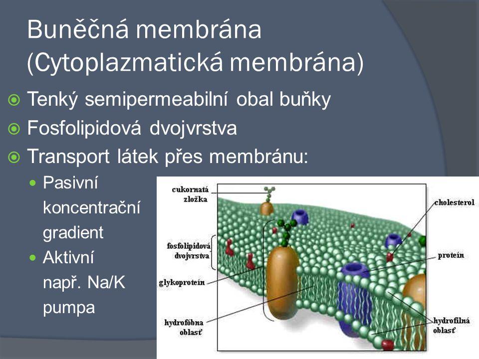 Buněčná membrána (Cytoplazmatická membrána)  Tenký semipermeabilní obal buňky  Fosfolipidová dvojvrstva  Transport látek přes membránu: Pasivní kon