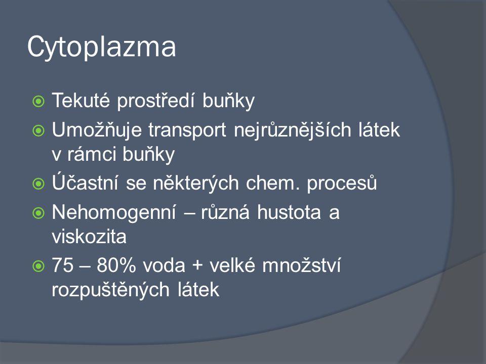 Cytoplazma  Tekuté prostředí buňky  Umožňuje transport nejrůznějších látek v rámci buňky  Účastní se některých chem. procesů  Nehomogenní – různá