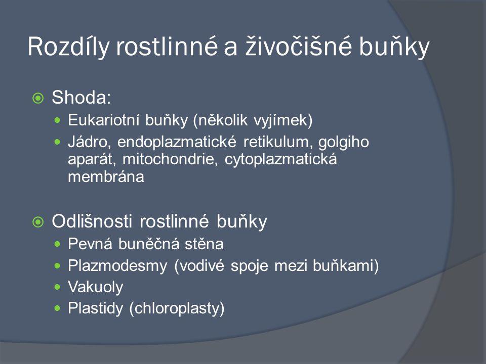 Rozdíly rostlinné a živočišné buňky  Shoda: Eukariotní buňky (několik vyjímek) Jádro, endoplazmatické retikulum, golgiho aparát, mitochondrie, cytopl