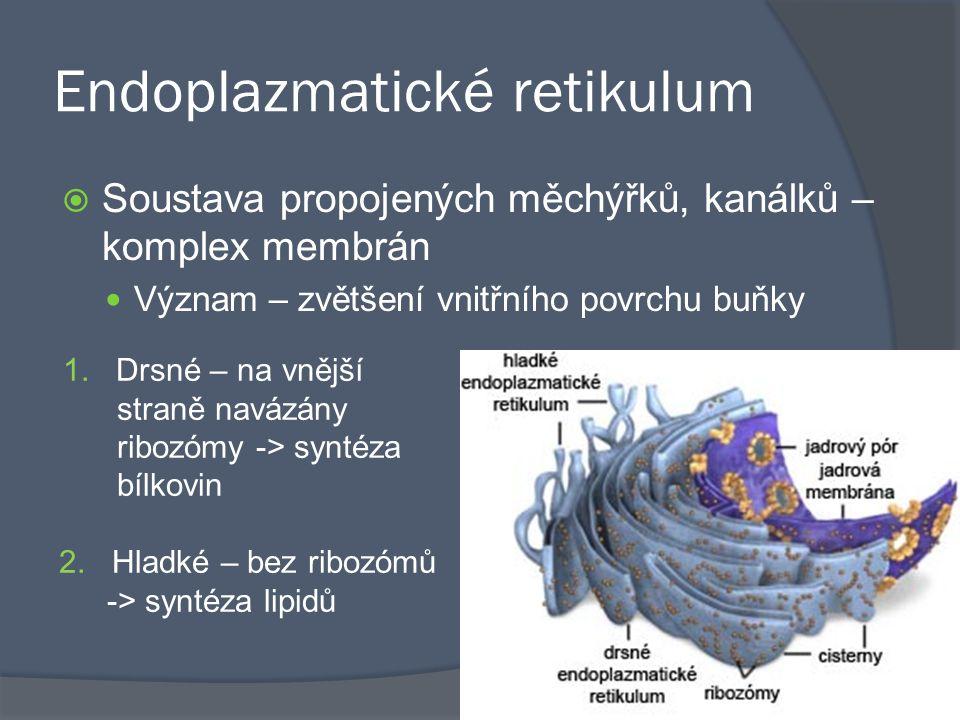 Endoplazmatické retikulum  Soustava propojených měchýřků, kanálků – komplex membrán Význam – zvětšení vnitřního povrchu buňky 1. Drsné – na vnější st