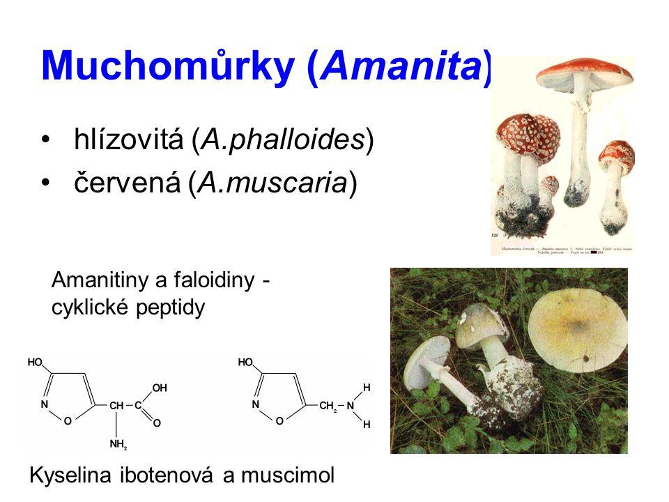 Muchomůrky (Amanita) hlízovitá (A.phalloides) červená (A.muscaria) Kyselina ibotenová a muscimol Amanitiny a faloidiny - cyklické peptidy