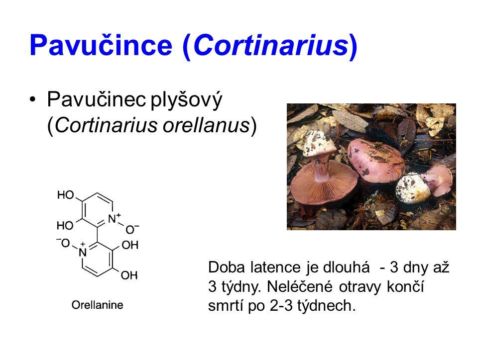 Pavučince (Cortinarius) Pavučinec plyšový (Cortinarius orellanus) Doba latence je dlouhá - 3 dny až 3 týdny. Neléčené otravy končí smrtí po 2-3 týdnec