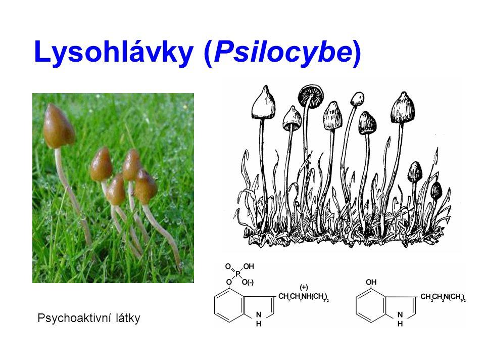 Lysohlávky (Psilocybe) Psychoaktivní látky