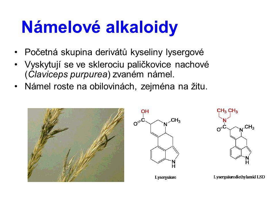 Námelové alkaloidy Početná skupina derivátů kyseliny lysergové Vyskytují se ve sklerociu paličkovice nachové (Claviceps purpurea) zvaném námel. Námel