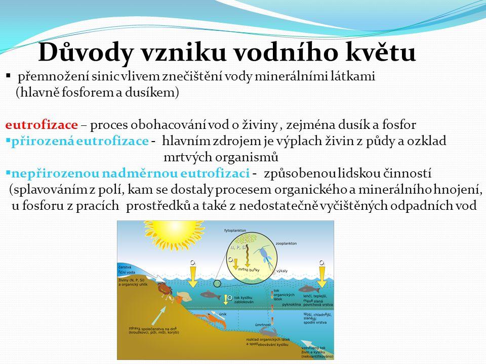 Důvody vzniku vodního květu  přemnožení sinic vlivem znečištění vody minerálními látkami (hlavně fosforem a dusíkem) eutrofizace – proces obohacování
