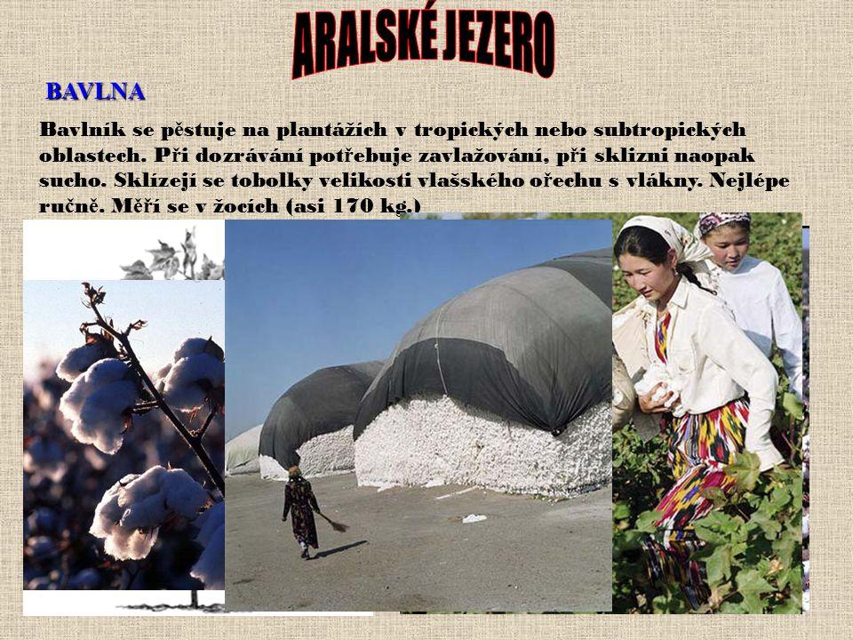 Co je příčinou vysychání? 1. kolísání klimatu 2. Důsledek činnosti člověka Střední Asie je důležitou oblastí pěstování bavlny. Střední Asie je ohrožen
