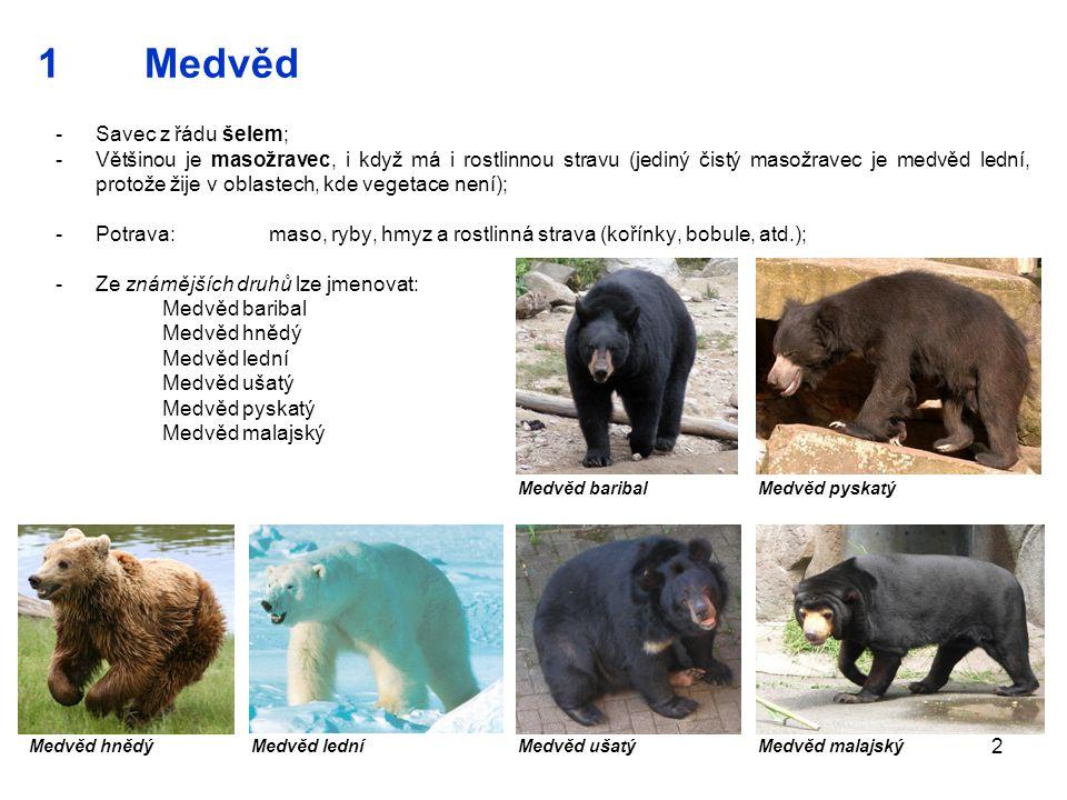 2 1Medvěd -Savec z řádu šelem; -Většinou je masožravec, i když má i rostlinnou stravu (jediný čistý masožravec je medvěd lední, protože žije v oblaste