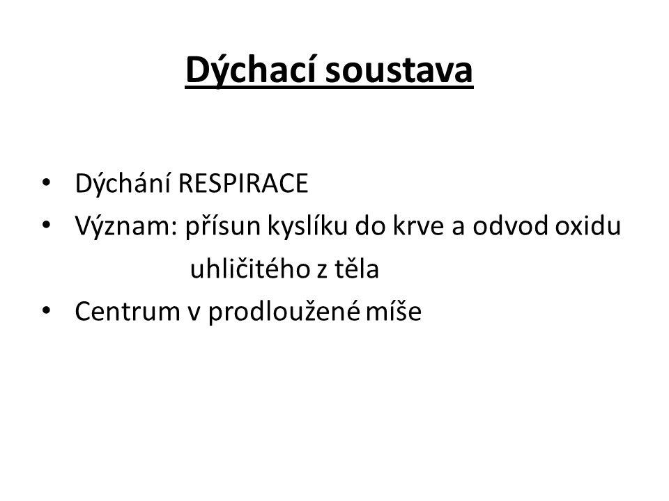 Dýchací soustava Dýchání RESPIRACE Význam: přísun kyslíku do krve a odvod oxidu uhličitého z těla Centrum v prodloužené míše