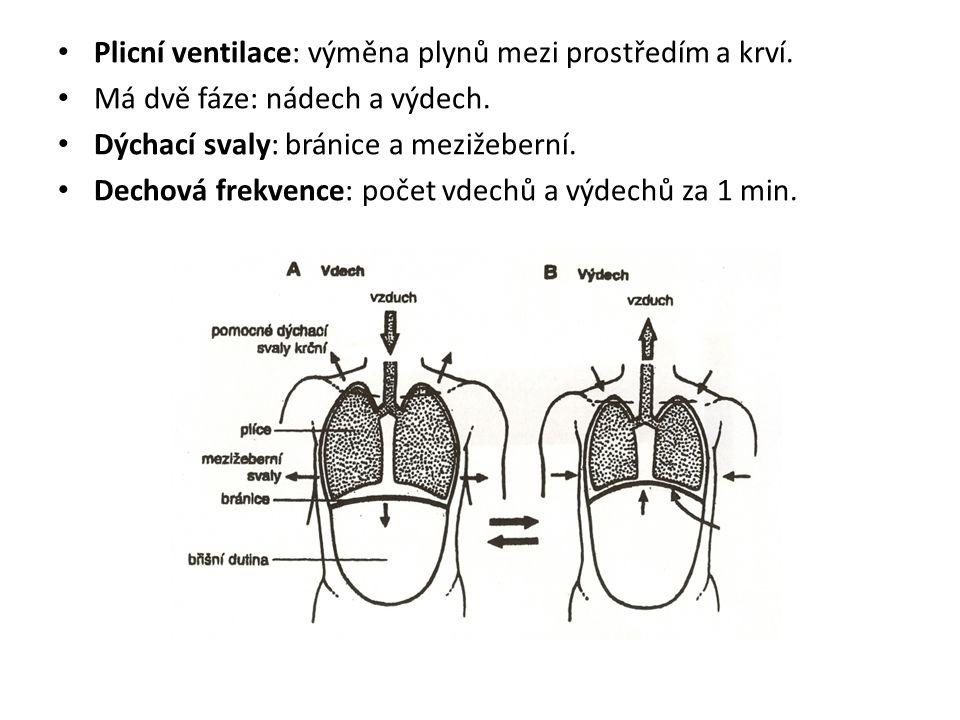 Plicní ventilace: výměna plynů mezi prostředím a krví. Má dvě fáze: nádech a výdech. Dýchací svaly: bránice a mezižeberní. Dechová frekvence: počet vd