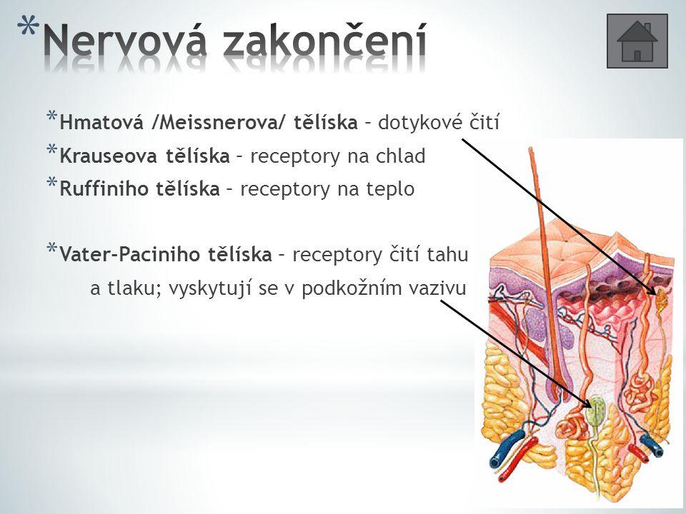 * Vazivová vrstva více či méně bohatá na tuk – zásoba energie * Umožňuje pohyblivost kůže * Co vnímají Vater-Paciniho tělíska.