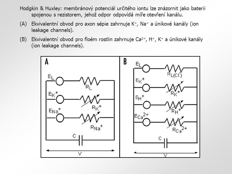Hodgkin & Huxley: membránový potenciál určitého iontu lze znázornit jako baterii spojenou s rezistorem, jehož odpor odpovídá míře otevření kanálu. (A)
