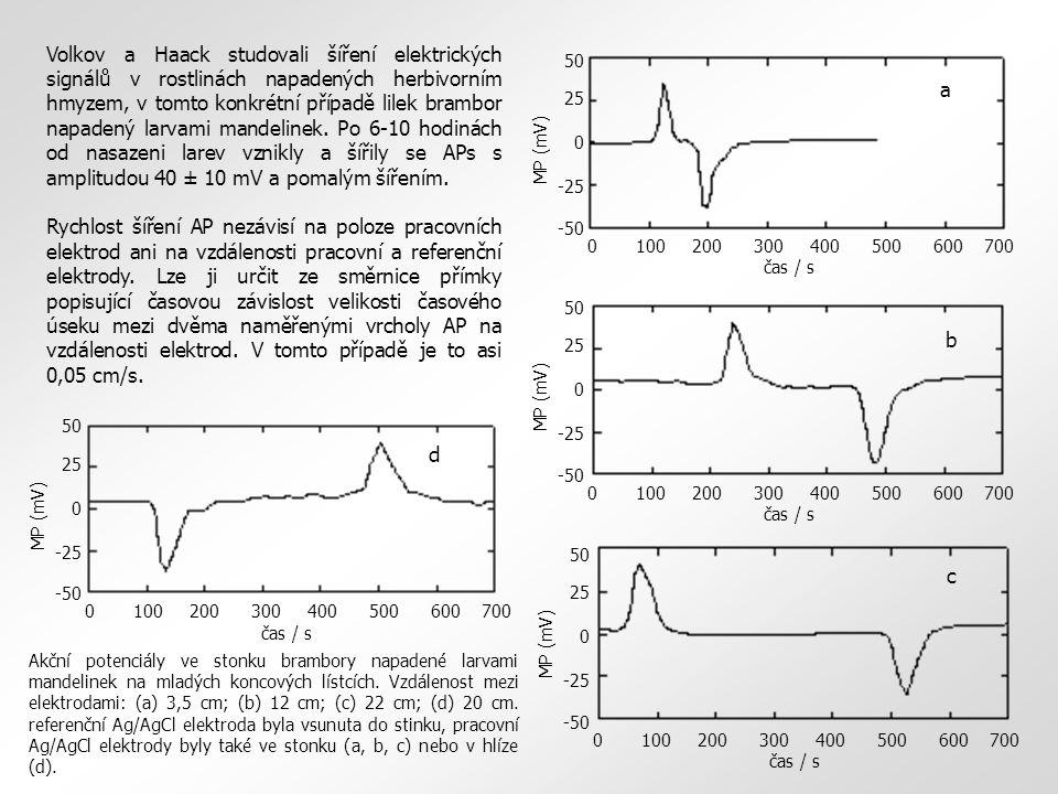 Volkov a Haack studovali šíření elektrických signálů v rostlinách napadených herbivorním hmyzem, v tomto konkrétní případě lilek brambor napadený larv