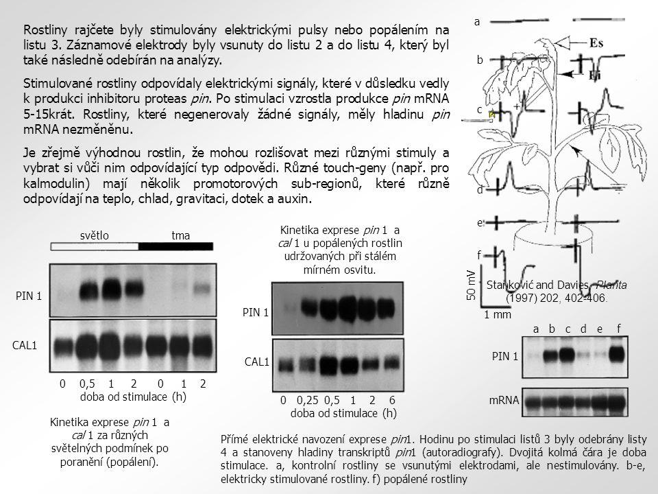 Stanković and Davies, Planta (1997) 202, 402-406. Rostliny rajčete byly stimulovány elektrickými pulsy nebo popálením na listu 3. Záznamové elektrody