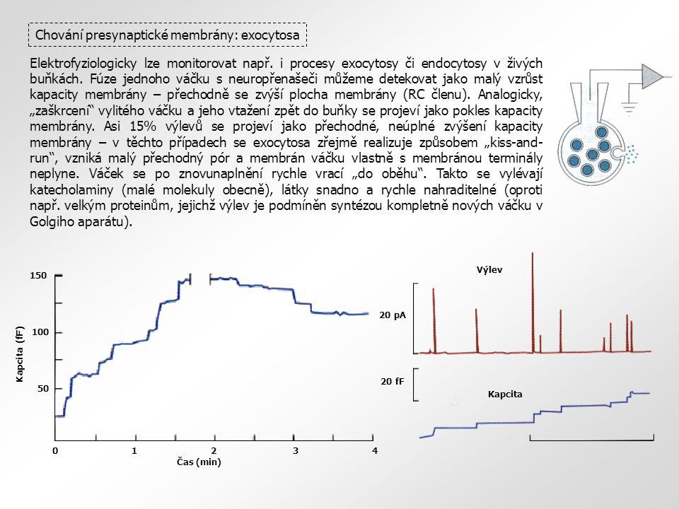 Chování presynaptické membrány: exocytosa Elektrofyziologicky lze monitorovat např. i procesy exocytosy či endocytosy v živých buňkách. Fúze jednoho v