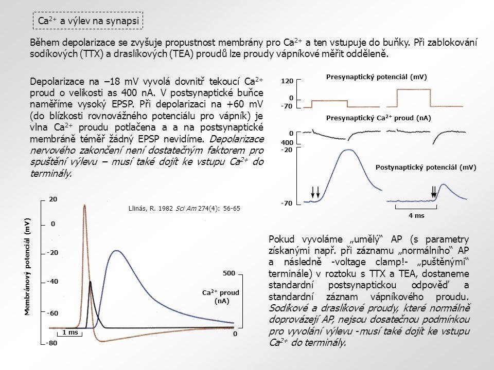 Během depolarizace se zvyšuje propustnost membrány pro Ca 2+ a ten vstupuje do buňky. Při zablokování sodíkových (TTX) a draslíkových (TEA) proudů lze
