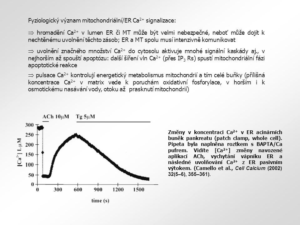 Změny v koncentraci Ca 2+ v ER acinárních buněk pankreatu (patch clamp, whole cell). Pipeta byla naplněna roztkem s BAPTA/Ca pufrem. Vidíte [Ca 2+ ] z