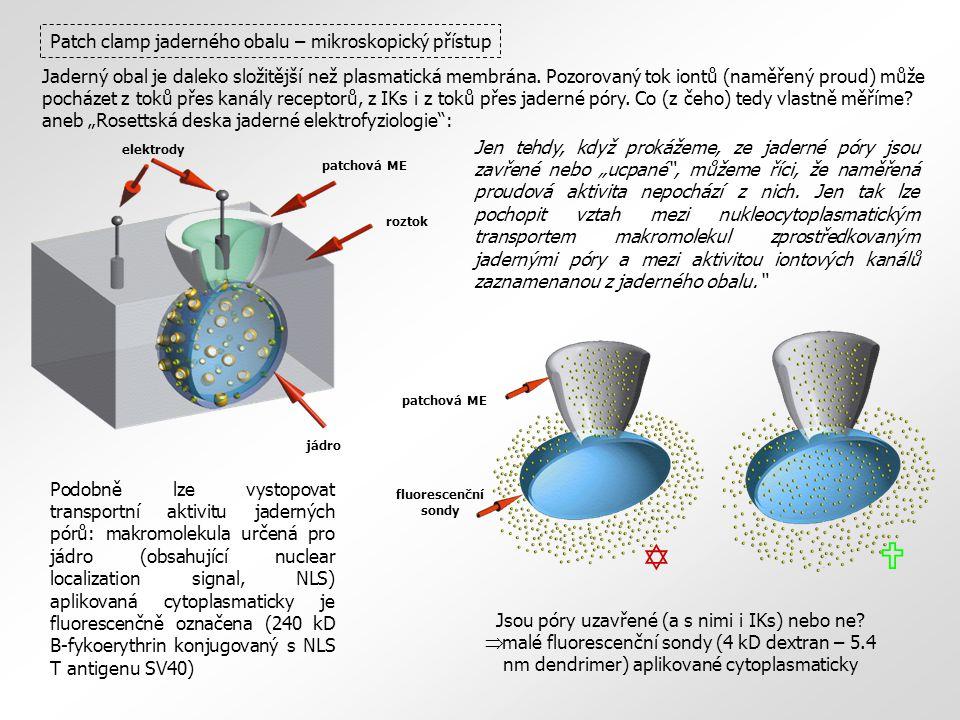 roztok elektrody patchová ME jádro fluorescenční sondy patchová ME Patch clamp jaderného obalu – mikroskopický přístup Jaderný obal je daleko složitěj