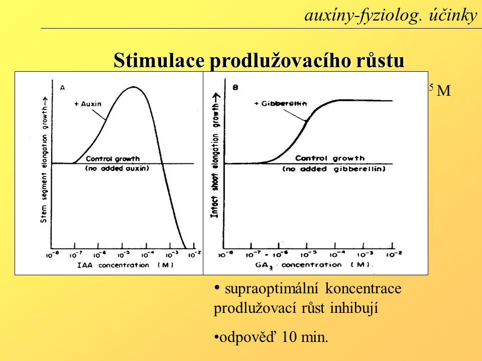 optimální koncentrace 10 -6 - 10 -5 M (stonek) supraoptimální koncentrace prodlužovací růst inhibují odpověď 10 min. Stimulace prodlužovacího růstu au