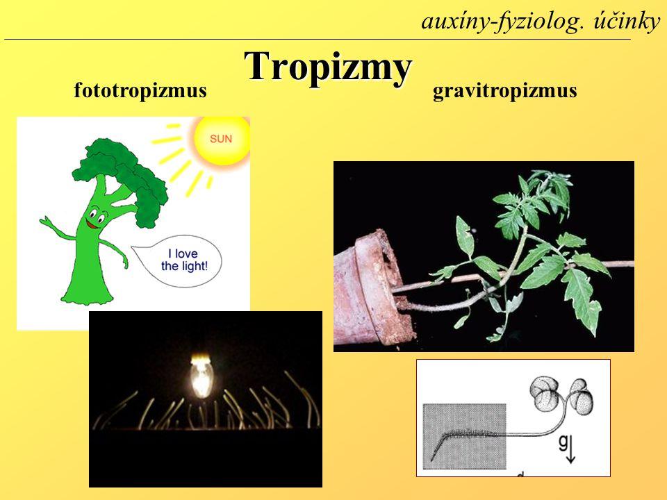 Tropizmy fototropizmusgravitropizmus auxíny-fyziolog. účinky