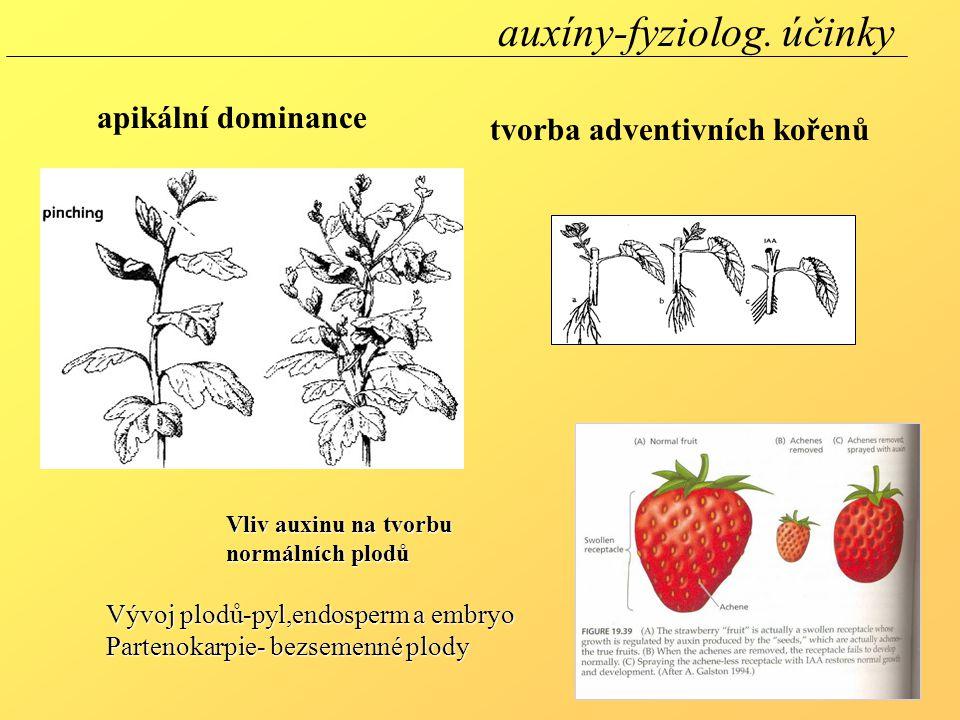 apikální dominance tvorba adventivních kořenů Vliv auxinu na tvorbu normálních plodů Vývoj plodů-pyl,endosperm a embryo Partenokarpie- bezsemenné plod
