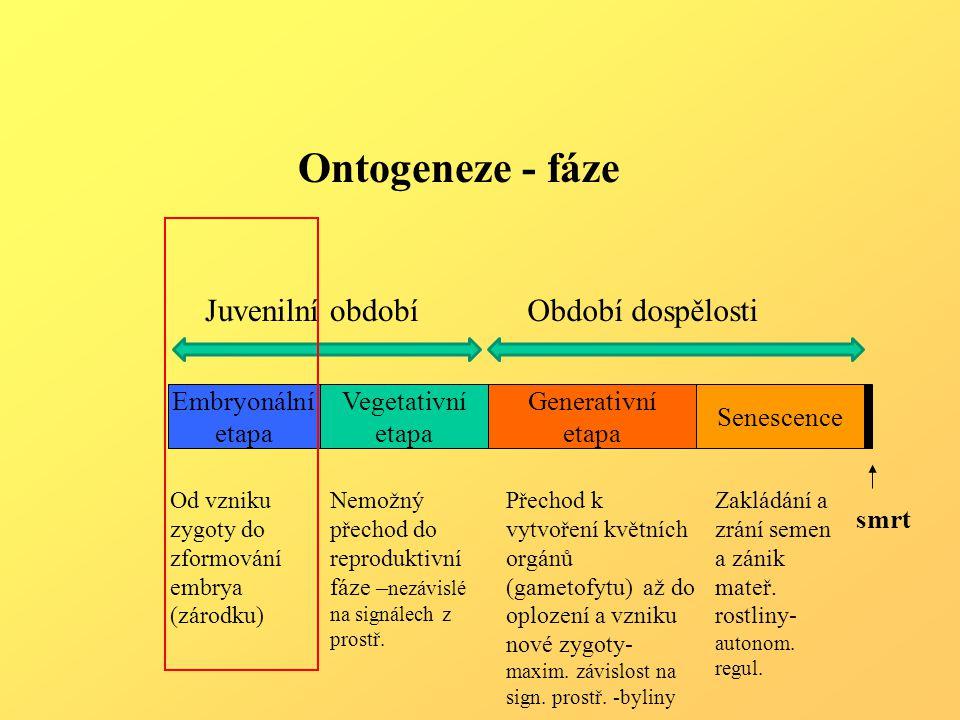 Generativní etapa Senescence Embryonální etapa Vegetativní etapa smrt Ontogeneze - fáze Od vzniku zygoty do zformování embrya (zárodku) Nemožný přechod do reproduktivní fáze – nezávislé na signálech z prostř.