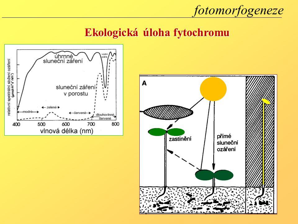 Ekologická úloha fytochromu fotomorfogeneze