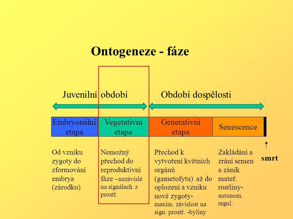 Komerční využití látek cytokininové povahy Komerční využití látek cytokininové povahy.