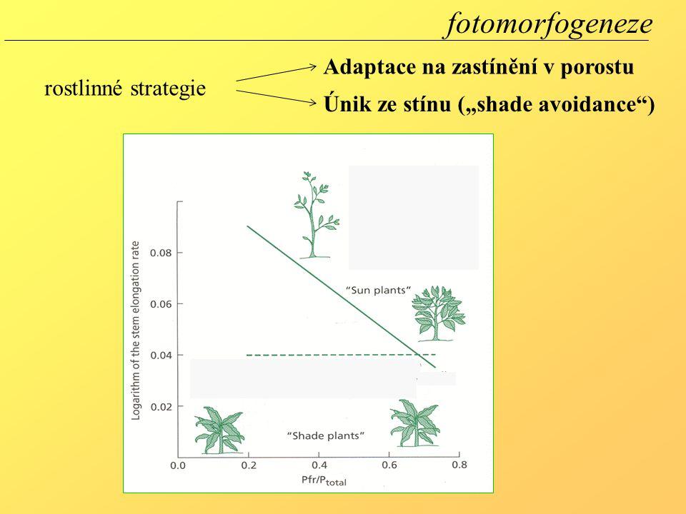"""Únik ze stínu (""""shade avoidance"""") Adaptace na zastínění v porostu fotomorfogeneze rostlinné strategie"""