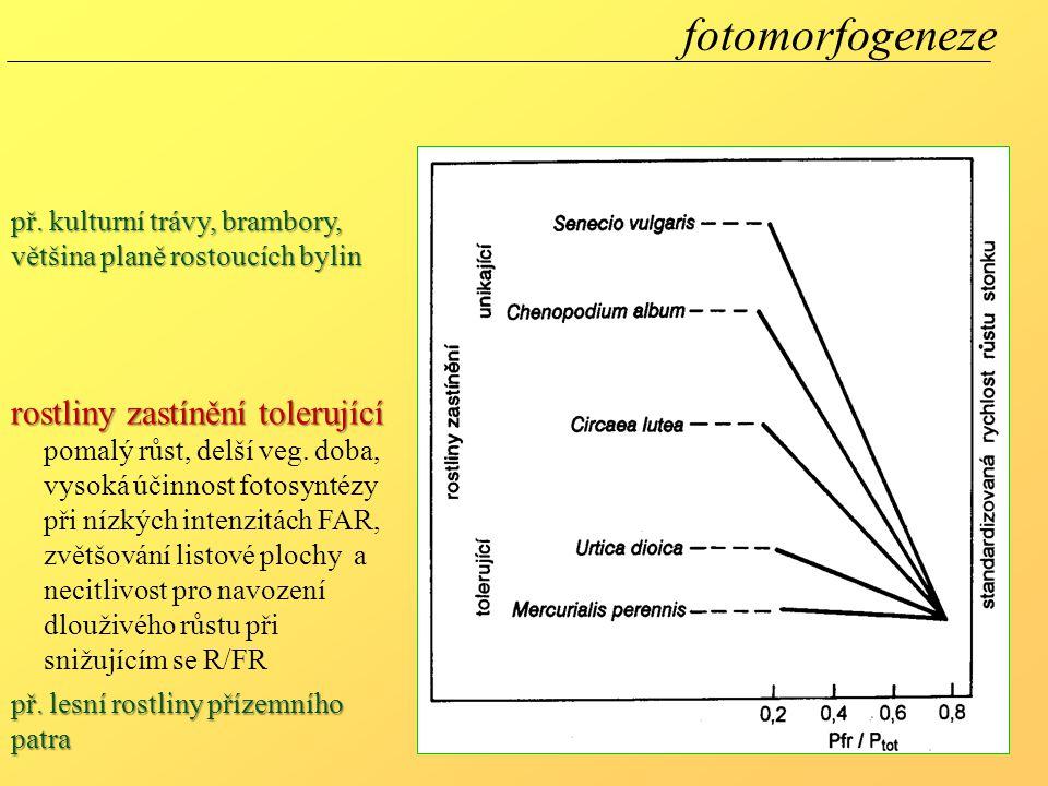 fotomorfogeneze pomalý růst, delší veg. doba, vysoká účinnost fotosyntézy při nízkých intenzitách FAR, zvětšování listové plochy a necitlivost pro nav