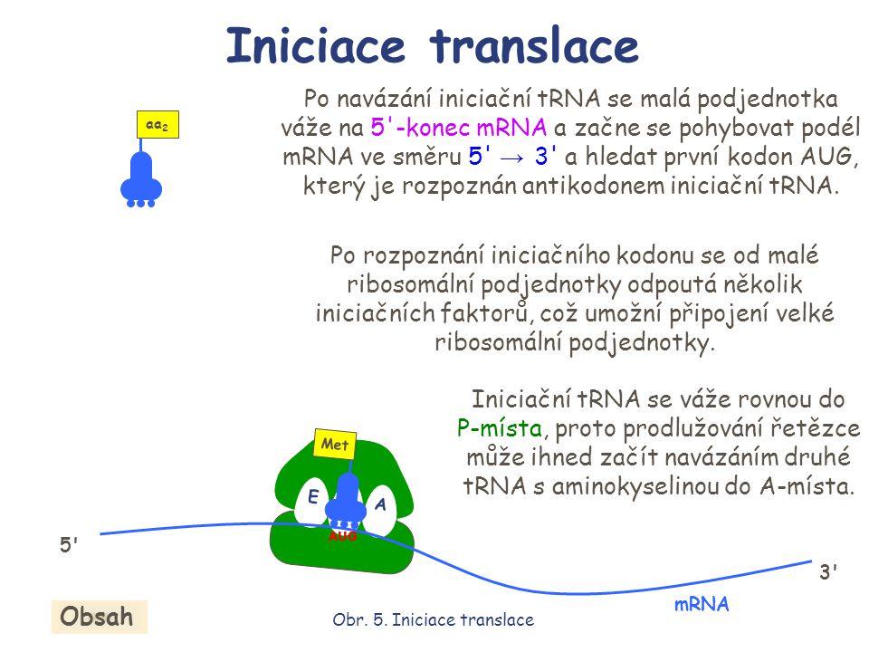 Po navázání iniciační tRNA se malá podjednotka váže na 5'-konec mRNA a začne se pohybovat podél mRNA ve směru 5' → 3' a hledat první kodon AUG, který