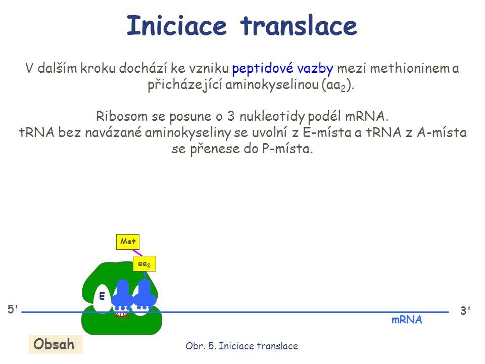 Iniciace translace V dalším kroku dochází ke vzniku peptidové vazby mezi methioninem a přicházející aminokyselinou (aa 2 ). Ribosom se posune o 3 nukl