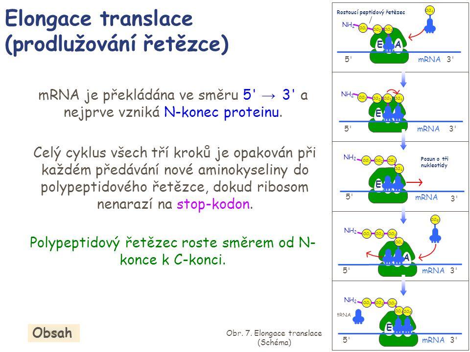 mRNA je překládána ve směru 5' → 3' a nejprve vzniká N-konec proteinu. Celý cyklus všech tří kroků je opakován při každém předávání nové aminokyseliny