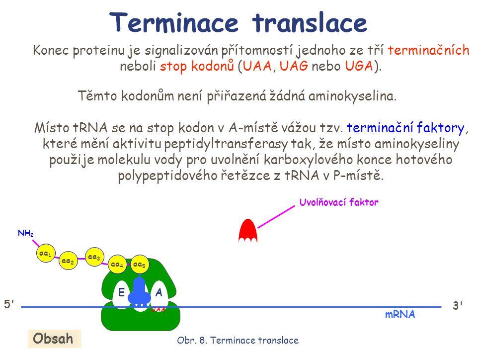 EPA aa 5 aa 4 aa 3 aa 2 aa 1 NH 2 Konec proteinu je signalizován přítomností jednoho ze tří terminačních neboli stop kodonů (UAA, UAG nebo UGA). 5' 3'