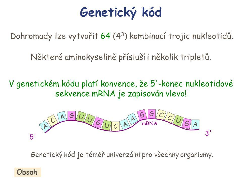 Dohromady lze vytvořit 64 (4 3 ) kombinací trojic nukleotidů. Některé aminokyselině přísluší i několik tripletů. V genetickém kódu platí konvence, že