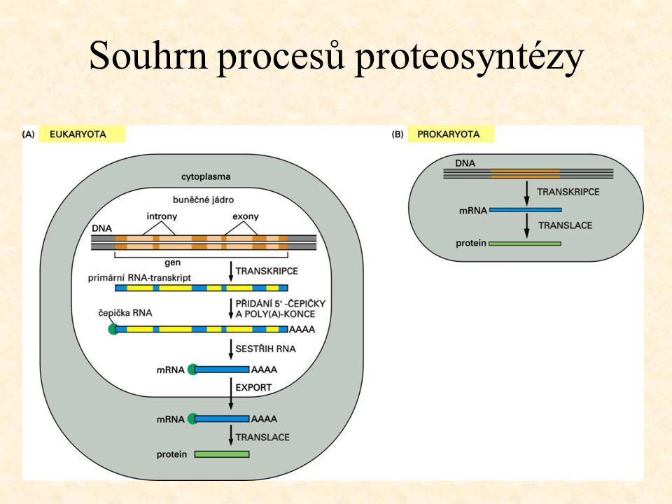 Souhrn procesů proteosyntézy