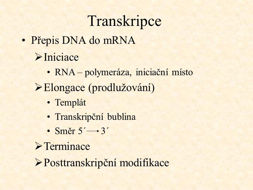 Transkripce Přepis DNA do mRNA  Iniciace RNA – polymeráza, iniciační místo  Elongace (prodlužování) Templát Transkripční bublina Směr 5´ 3´  Termin