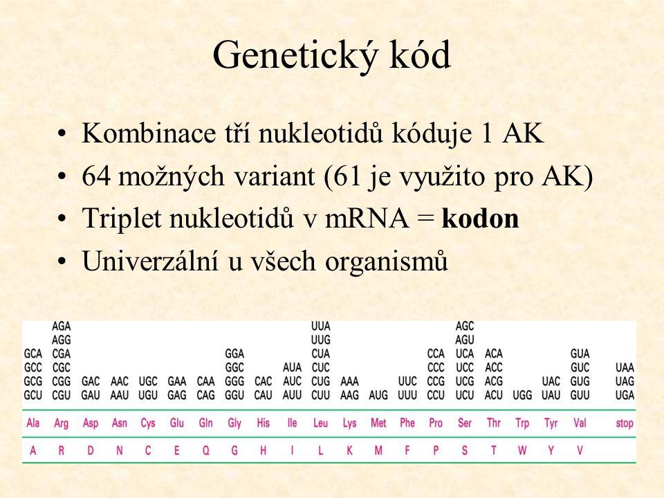 Genetický kód Kombinace tří nukleotidů kóduje 1 AK 64 možných variant (61 je využito pro AK) Triplet nukleotidů v mRNA = kodon Univerzální u všech org