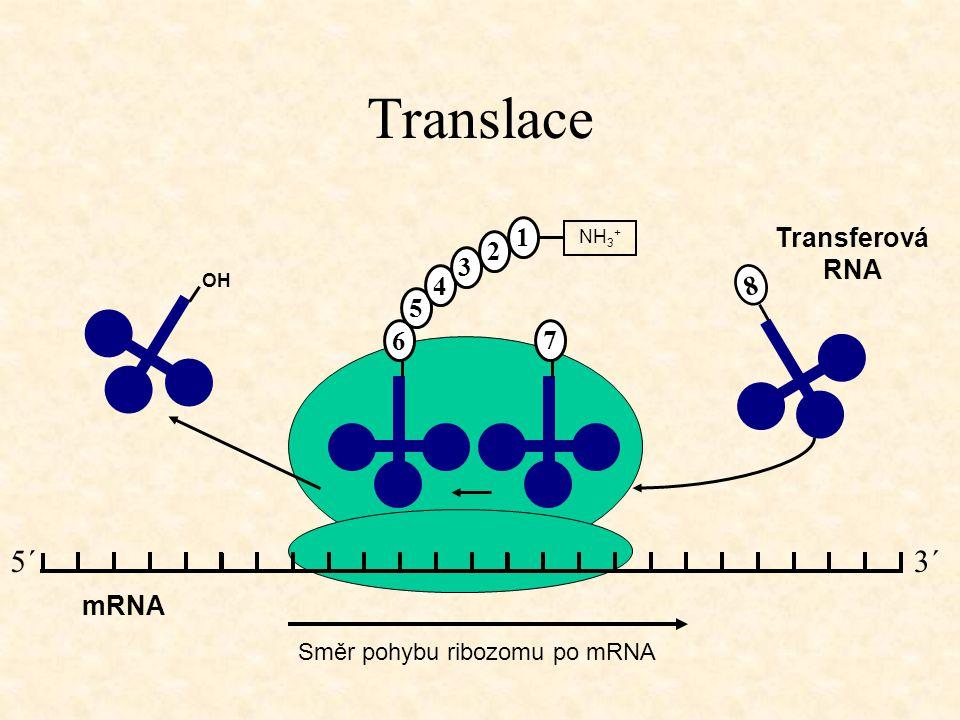Translace mRNA Směr pohybu ribozomu po mRNA OH Transferová RNA 6 5 4 3 2 1 NH 3 + 8 7 3´5´