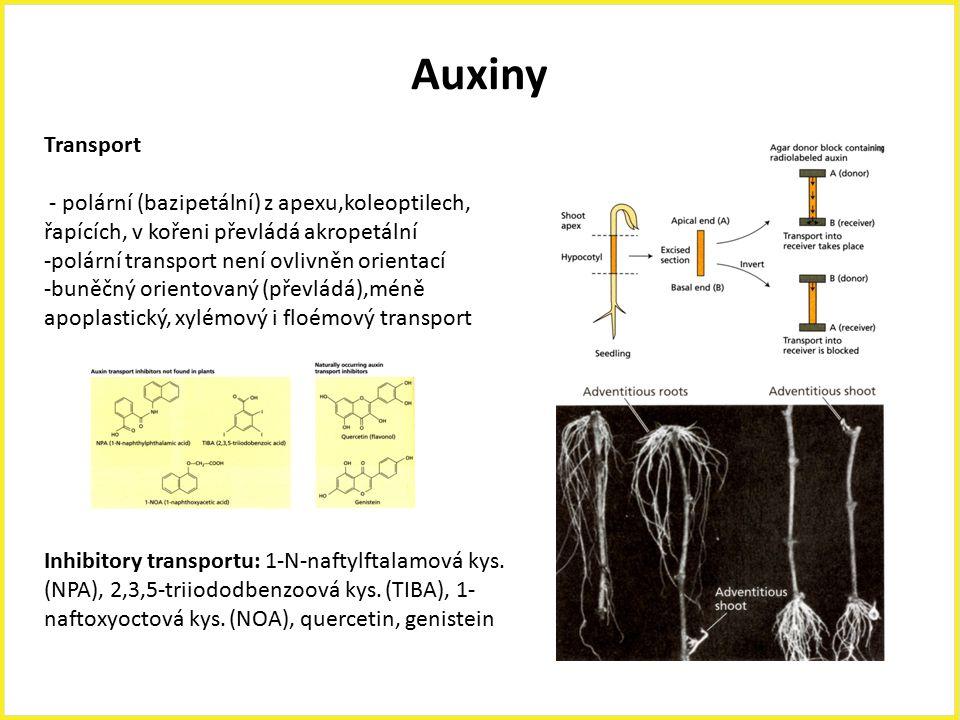 Auxiny Transport - polární (bazipetální) z apexu,koleoptilech, řapících, v kořeni převládá akropetální -polární transport není ovlivněn orientací -bun