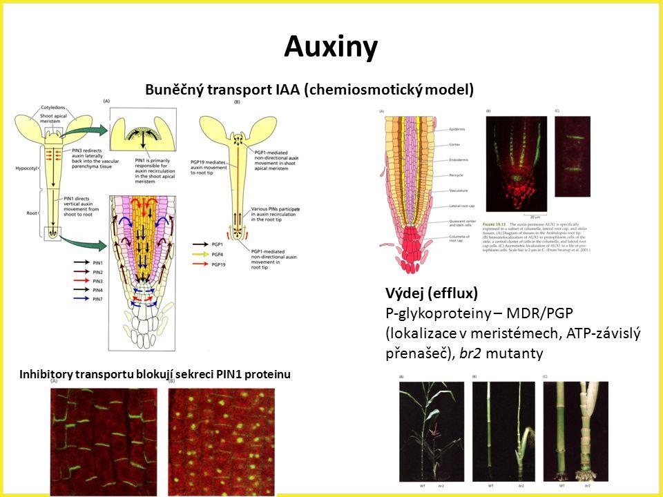 Auxiny Buněčný transport IAA (chemiosmotický model) Výdej (efflux) P-glykoproteiny – MDR/PGP (lokalizace v meristémech, ATP-závislý přenašeč), br2 mut