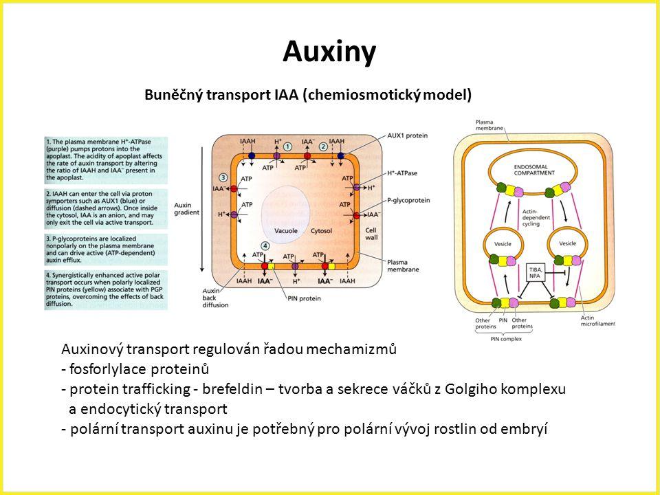 Auxiny Buněčný transport IAA (chemiosmotický model) Auxinový transport regulován řadou mechamizmů - fosforlylace proteinů - protein trafficking - bref