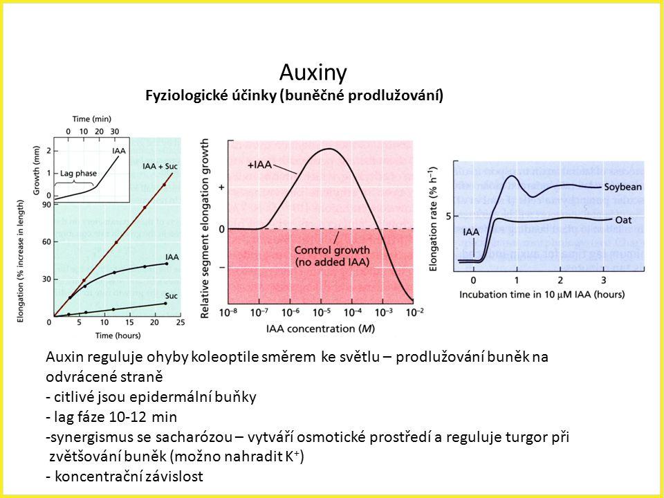Auxiny Fyziologické účinky (buněčné prodlužování) Auxin reguluje ohyby koleoptile směrem ke světlu – prodlužování buněk na odvrácené straně - citlivé