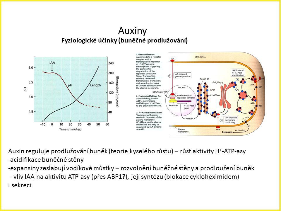 Auxiny Fyziologické účinky (buněčné prodlužování) Auxin reguluje prodlužování buněk (teorie kyselého růstu) – růst aktivity H + -ATP-asy -acidifikace