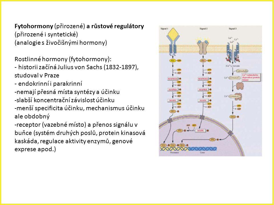 Fytohormony (přirozené) a růstové regulátory (přirozené i syntetické) (analogie s živočišnými hormony) Rostlinné hormony (fytohormony): - historii zač