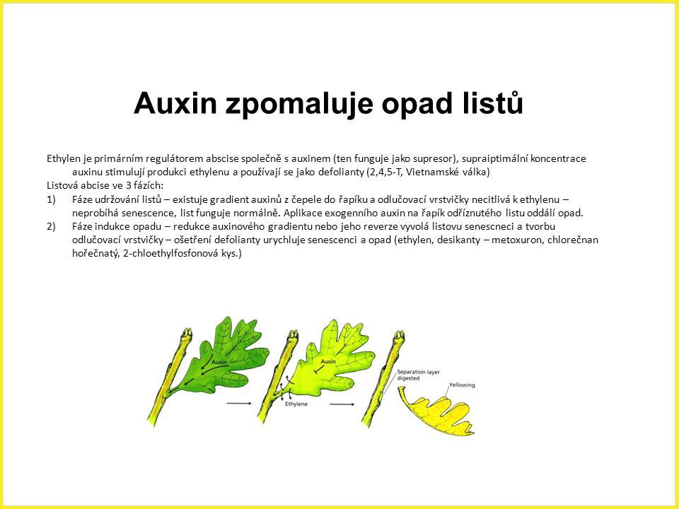 Auxin zpomaluje opad listů Ethylen je primárním regulátorem abscise společně s auxinem (ten funguje jako supresor), supraiptimální koncentrace auxinu