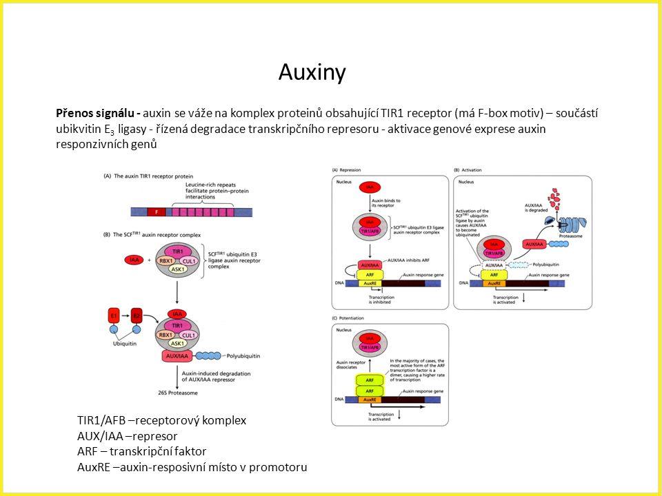 Auxiny TIR1/AFB –receptorový komplex AUX/IAA –represor ARF – transkripční faktor AuxRE –auxin-resposivní místo v promotoru Přenos signálu - auxin se v